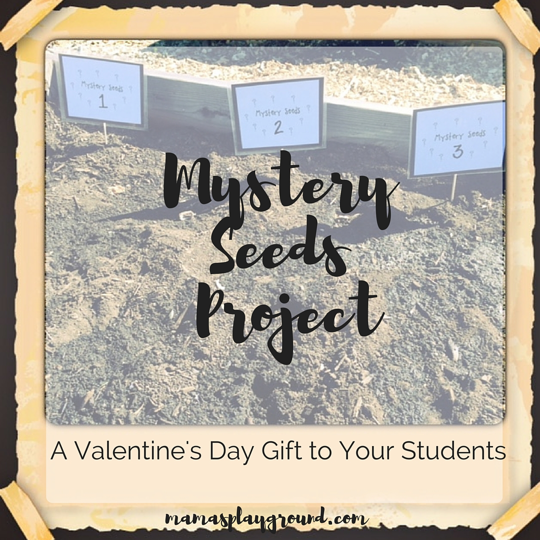 Mystery Seeds Project Insta